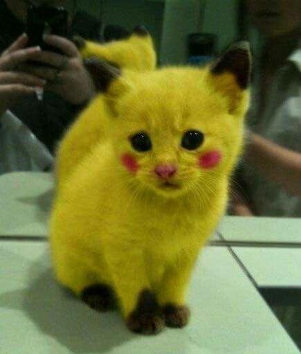 Filhote de Pokemon....