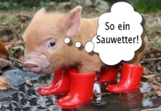 Bildergebnis Für Lustige Regenbilder Kostenlos Lustig Pinterest