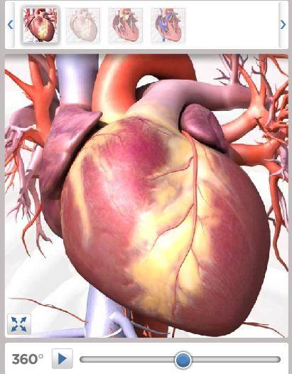 Free Educational Resource: Anatomy Videos   Cuerpo humano, Biología ...