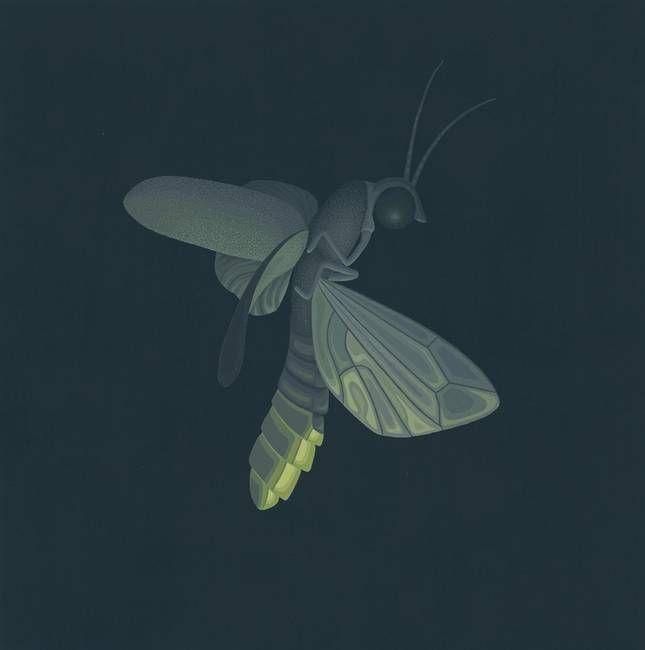 "Firefly"" by Nathan Marcy | Firefly art, Fireflies art print, Grey art"