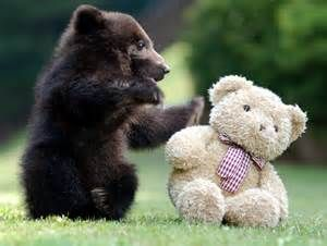 cute animal pictures - Yahoo Search Results