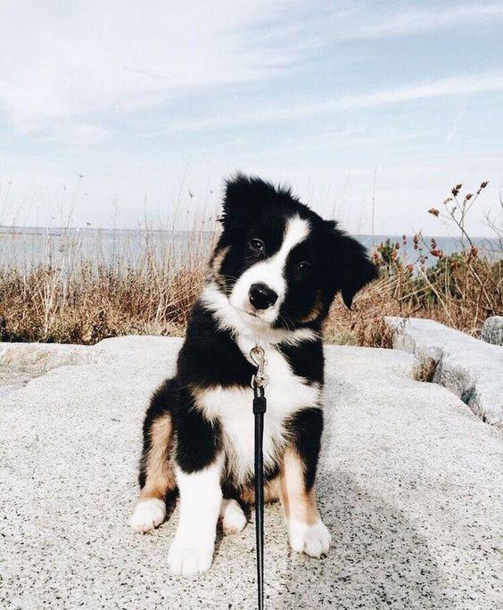 Photo of 6 razas de perros que son los mejores animales de apoyo emocional