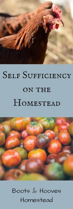 Self Sufficiency on the Homestead | Homesteading, Backyard ...