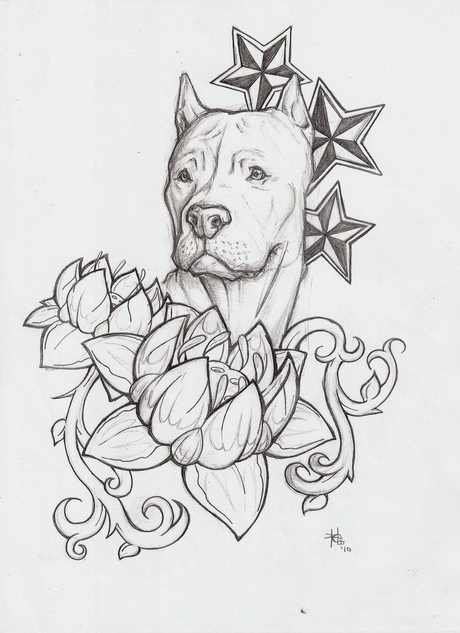 Uncategorized How To Draw Pitbulls happy birthday images with pitbulls pitbull cool red nose drawings new drawing showing post media for how to draw a dog solution to