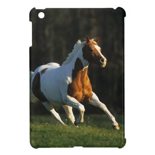 >>>This Deals          Paint Horse Running Fast iPad Mini Covers           Paint Horse Running Fast iPad Mini Covers we are given they also recommend where is the best to buyDiscount Deals          Paint Horse Running Fast iPad Mini Covers lowest price Fast Shipping and save your money Now!...Cleck Hot Deals >>> http://www.zazzle.com/paint_horse_running_fast_ipad_mini_covers-256831461137428793?rf=238627982471231924&zbar=1&tc=terrest