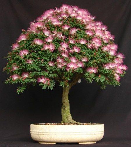 plantar flores em tronco de arvore - Pesquisa Google | Bonsai ...