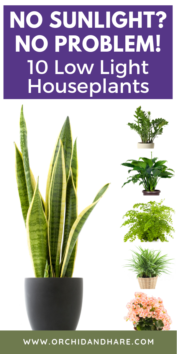10 Low Light House Plants Indoor Plants That Grow Without