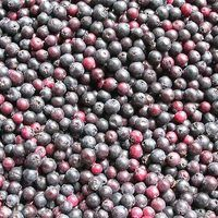 You may not be familiar with the Saskatoon berry. Perhaps, it is because you know it better as the juneberry or serviceberry. If you've tasted Saskatoon berries before and enjoyed them, don't let the idea of making your own jam scare you. It's really pretty easy and the homemade flavor you will receive for your efforts will be well worth it.