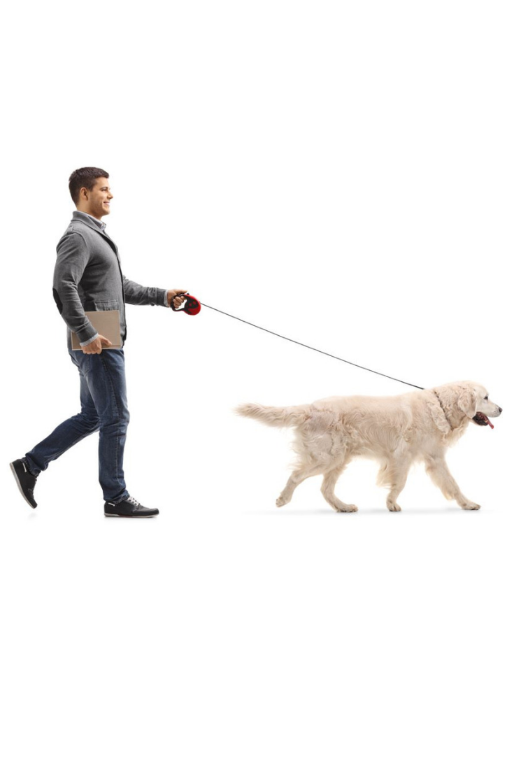 Full Length Profile Shot Of A Man With A Book Walking A Dog Isolated On White Background Goldenretriever Golden Retriever Dogs Retriever