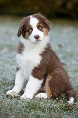Sofisticated Lady Cute Dogs Cute Puppies Cute Animals