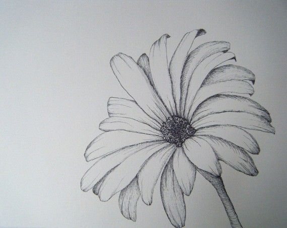 Flower Sketch With Images Flower Sketches Flower Sketch