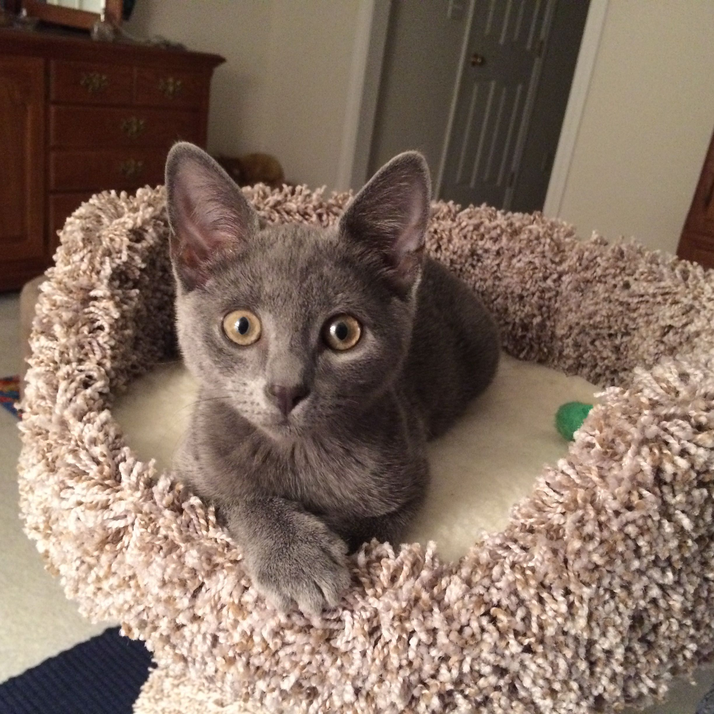 Rolo Now Buster Update He Has Settled In Beautifully Buster Is The Sweetest Most Active Friendliest Kitten I Have E Dog Adoption Great Cat Humane Society