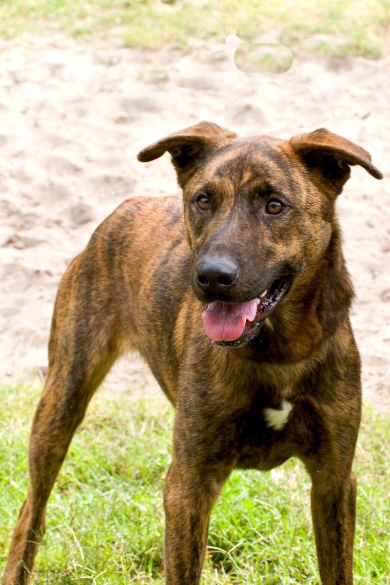 Adopt Flynn On Lap Dogs Shepherd Mix Dog Dog Adoption