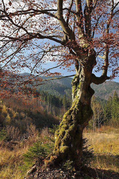 Strom v Porubskej doline.