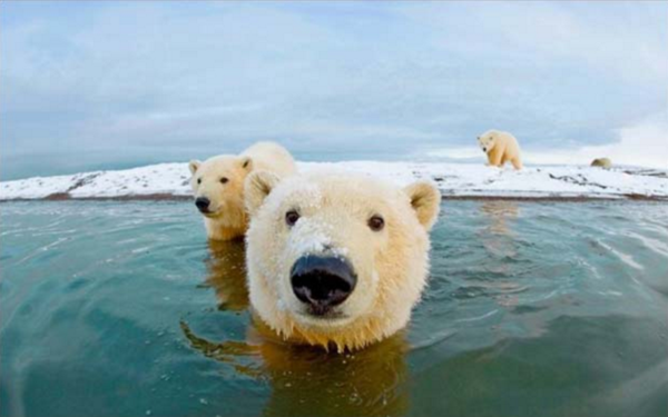 10 reasons to roar about Polar Bears International. 7. But through thick and thin, they've always kept their head above water.