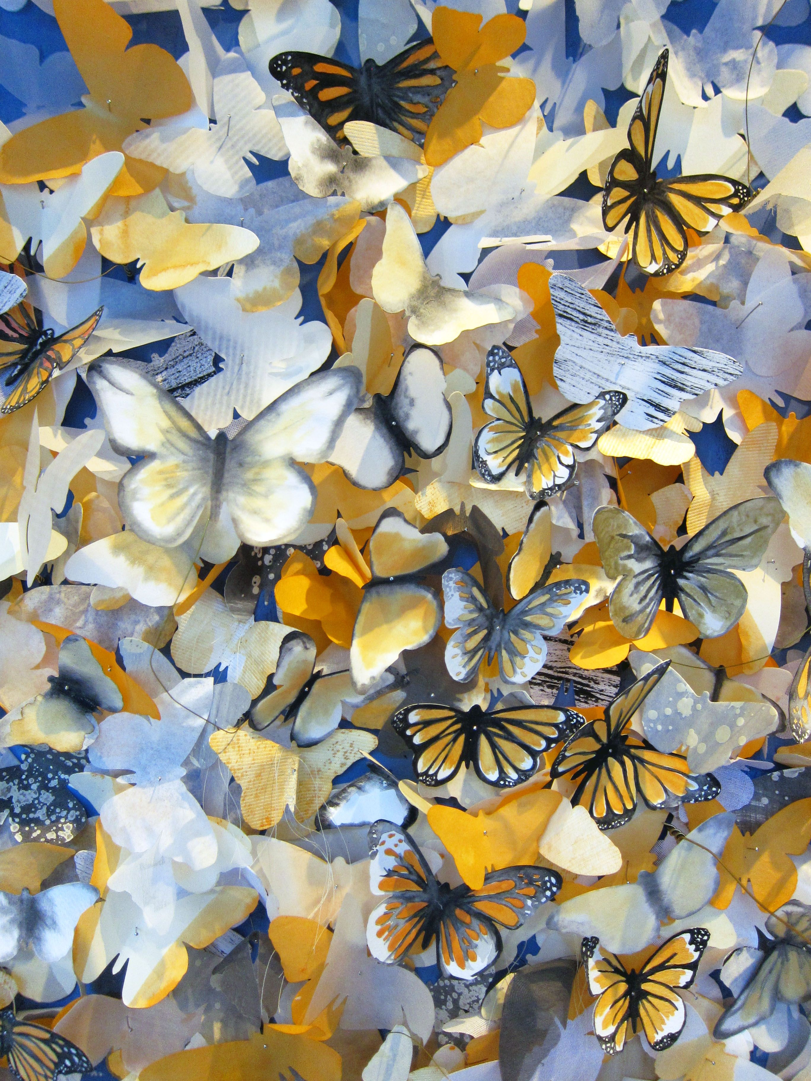 Color printing austin - Monique Badeanzug Mit Muschelkante Butterfly Printmonarch Butterflyearth Dayanthropologie Austininsectswindowpatternpaintingcolor
