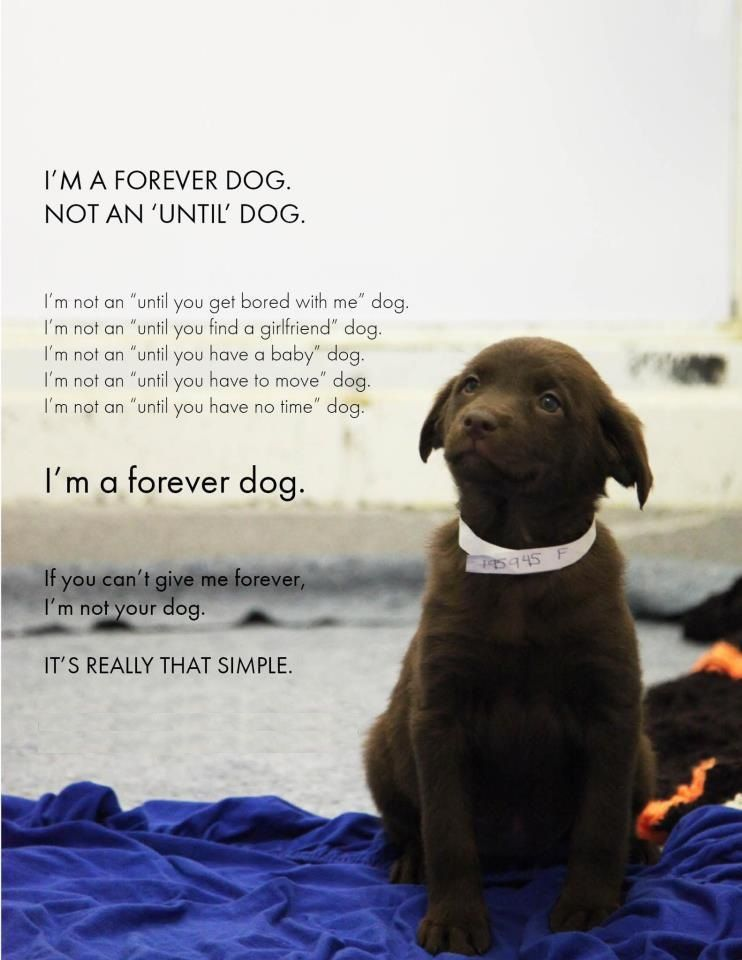 a pet owners manifesto...at least what it should be