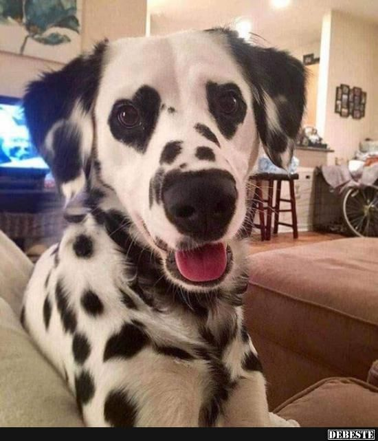 Photo of Dog with heart eyes .. | Funny pictures, sayings, jokes, really funny