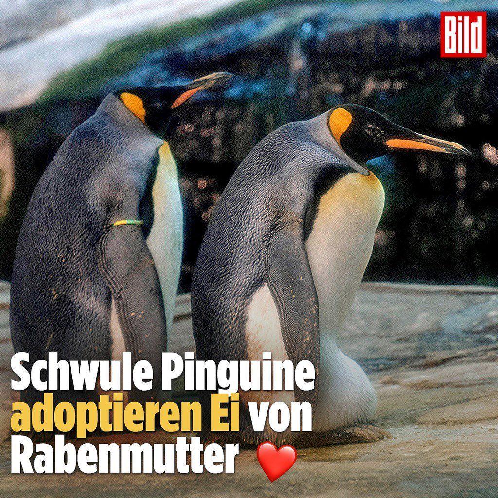 Interessante News Der Woche Conn3ctor Rabenmutter Pinguine Bilder