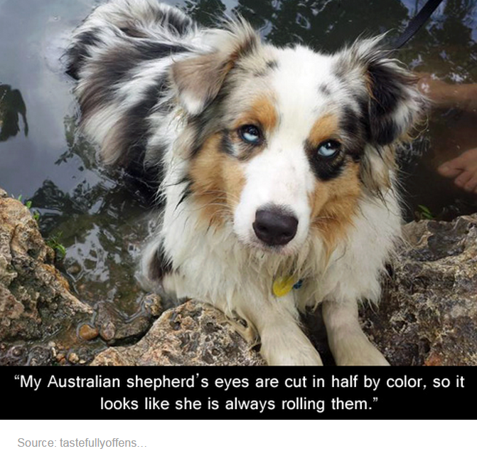This Is Awesome And Adorable I So Want My Dog To Have Eyes Like