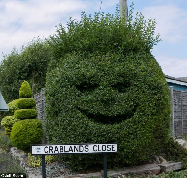 Topiary of the morning to you! Hedge trimmed to look like a smiling face.  and it looks like it's getting the thumbs up from another bush behind it