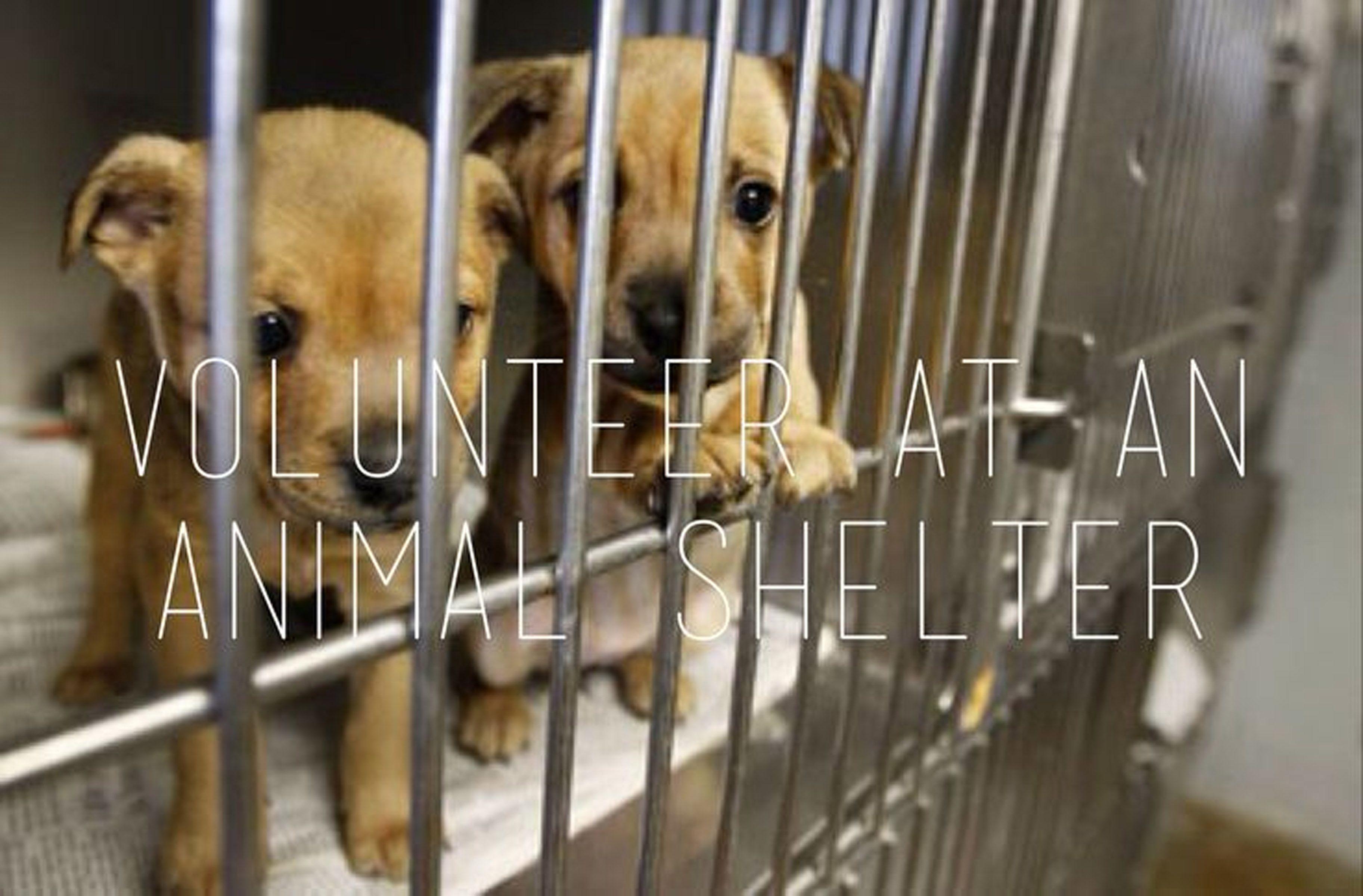 Volunteer at shelter