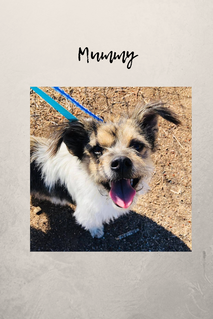 Mummy Is Ready To Find Her Furever Home For The Holidays Please Save Her And Her Pals At The Shelter By Adoptdontshop San Small Dog Adoption Animal Shelters Near Me