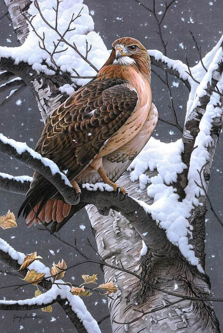 Rosemary Millette Поиск в Google Pet Birds Hawk Bird
