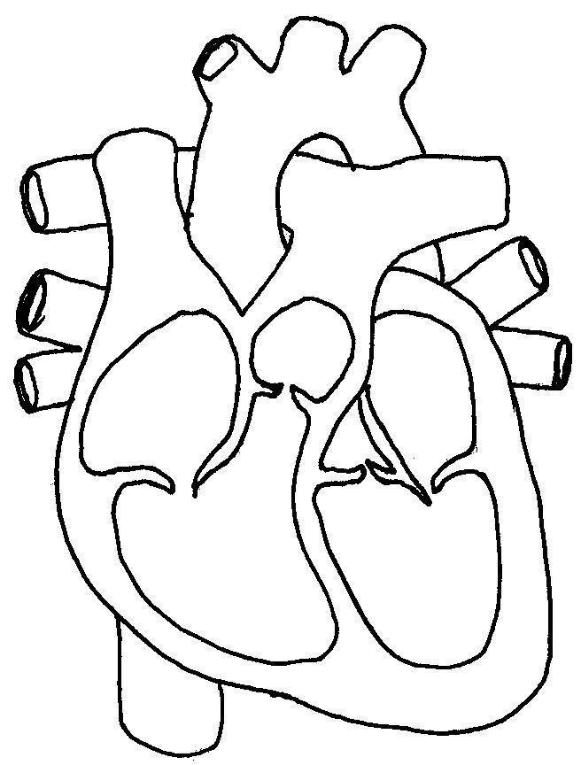 Simple Heart Diagram Unlabeled SHD08 (com imagens ...