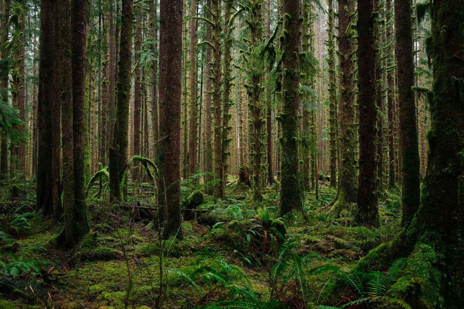 The Quietest Place In America Is Becoming A Warzone Ireland Landscape Nature Ireland Landscape Rainforest