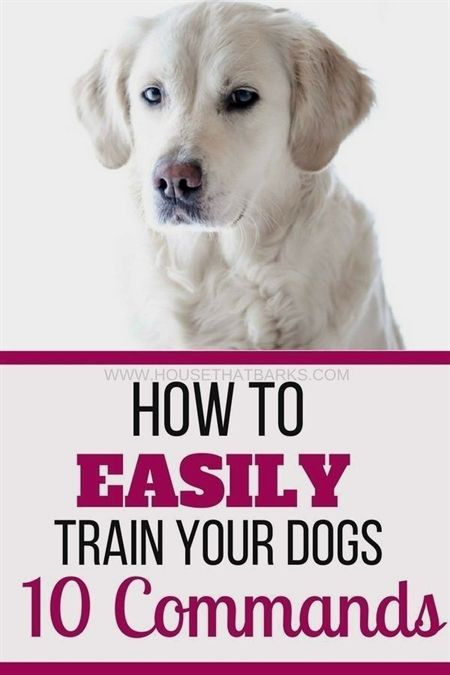Pin On Dog Training Videos