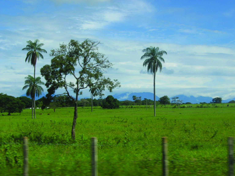 Autentico Llano Venezolano Turismo Venezuela Viajes Llanos Venezuela Venezolana Viajes