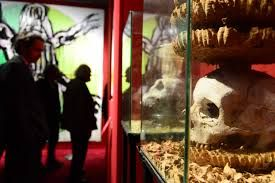Image result for Wunderkammer