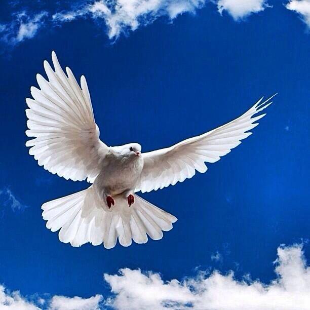 날아가는 새  #새 #bird #동물 #동물원 #사이버동물원 #animals #zoo#cyberzoo#cute
