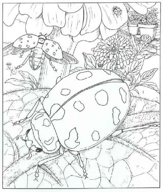 Ladybugs Coloring Pages Can Make Your Kids Have More Fun Times For Holidays Or Their Free May Need Concentration As The Higher