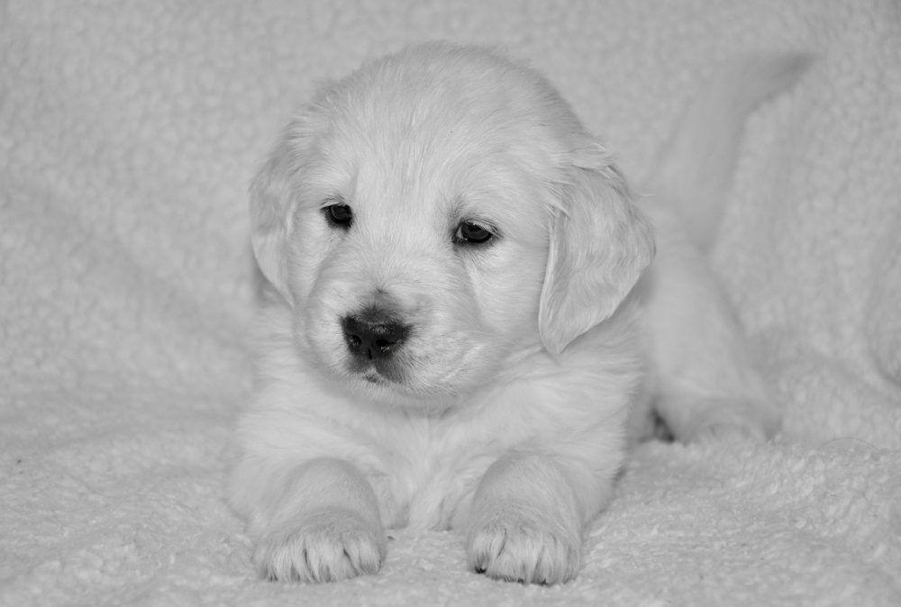 Buy Pet Supplies Online Buy Pets Online Pet Supplies Pets