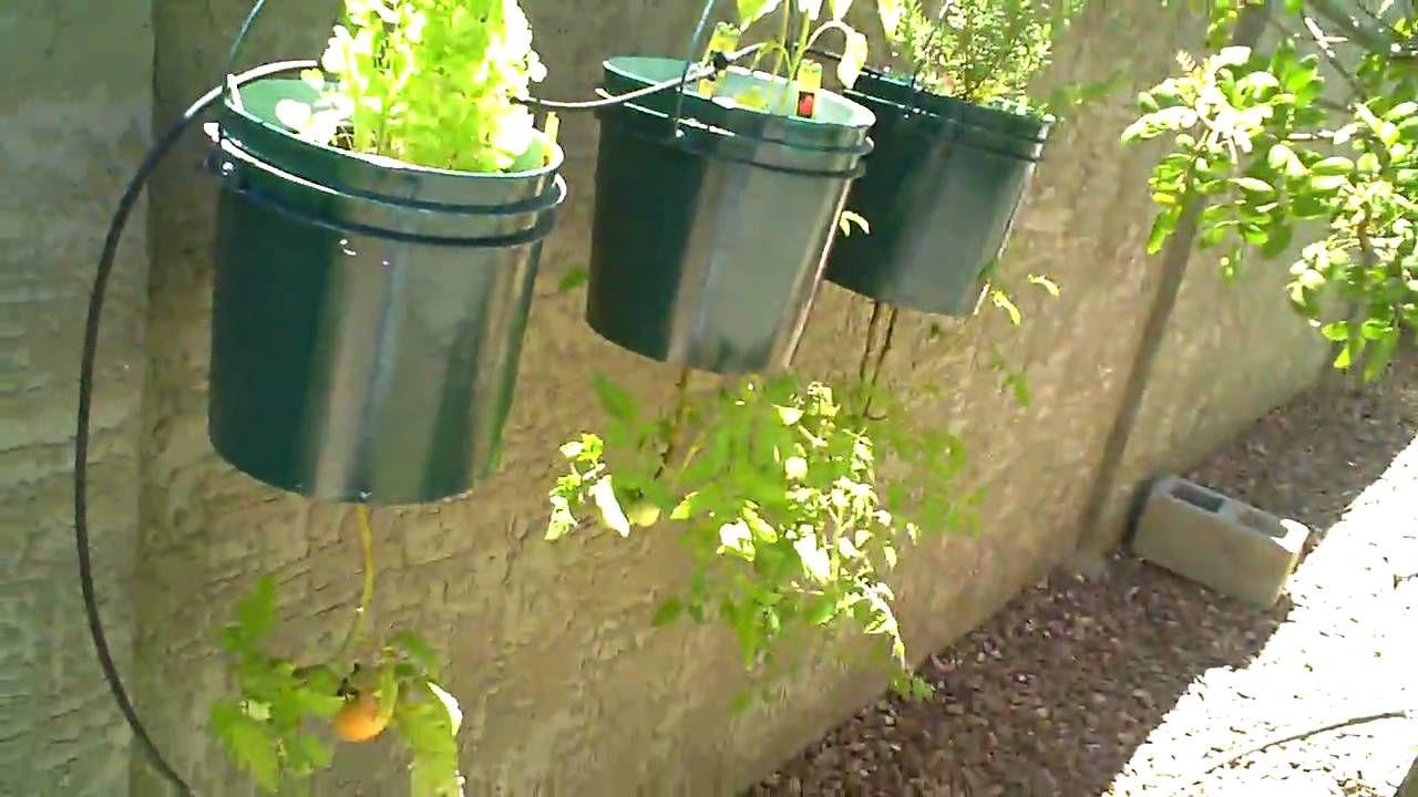 00f7734e8e9f053ebc996cffe5e512eb - Vegetable Gardening In The Desert Southwest
