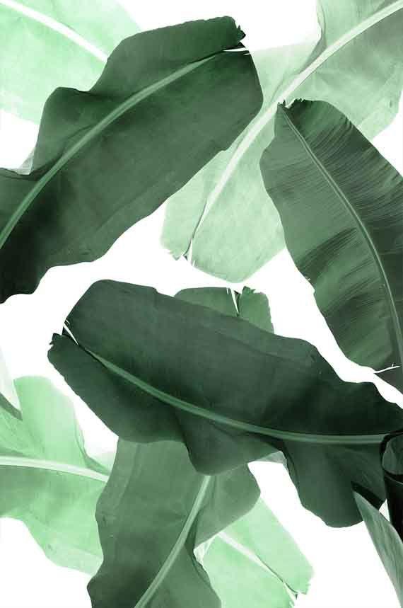 Tropical Leaves WallArt ArtPrint EtsyFinds