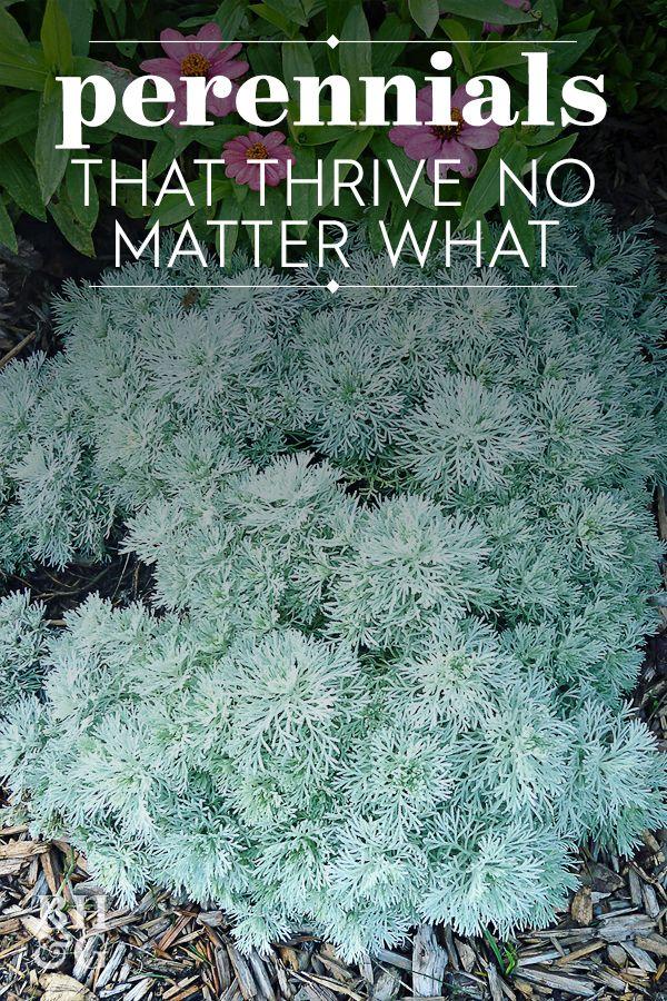 19 Power Perennials That Thrive No Matter What