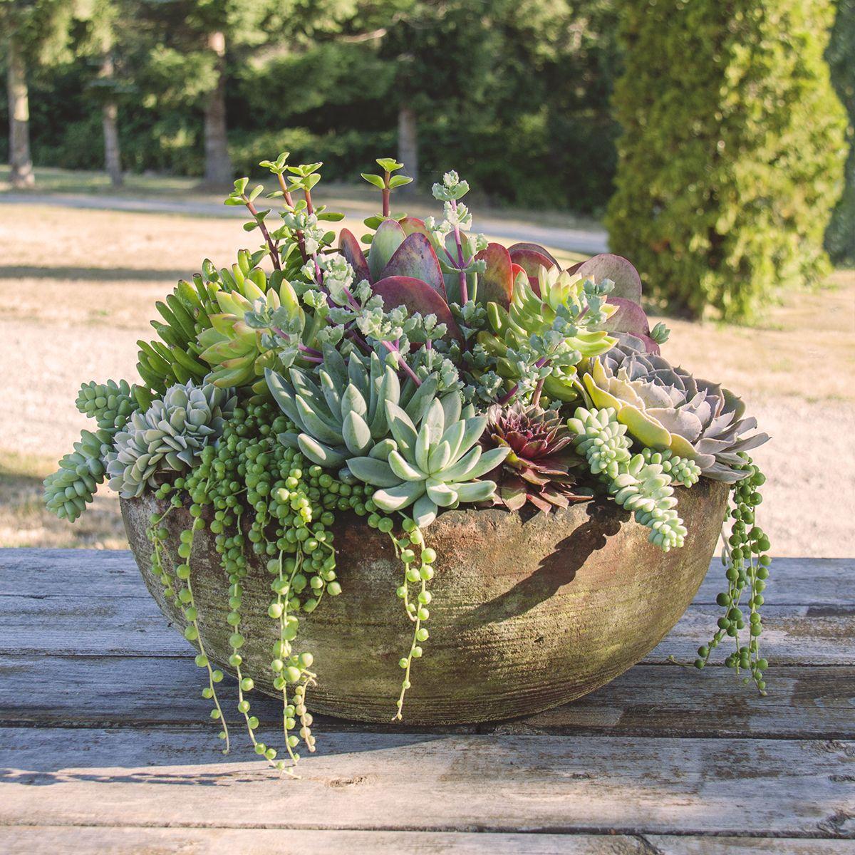 Absolutely Divine Succulent Planter Planted In House Succulent Garden Design Succulent Landscaping Succulent Garden Outdoor