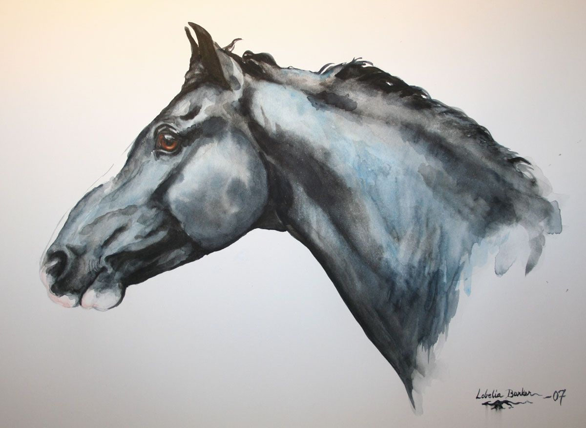 Lobelia Barker Fjord Horse