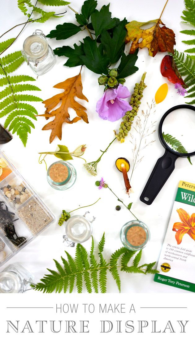 How to Make a Nature Display (+ video activity)