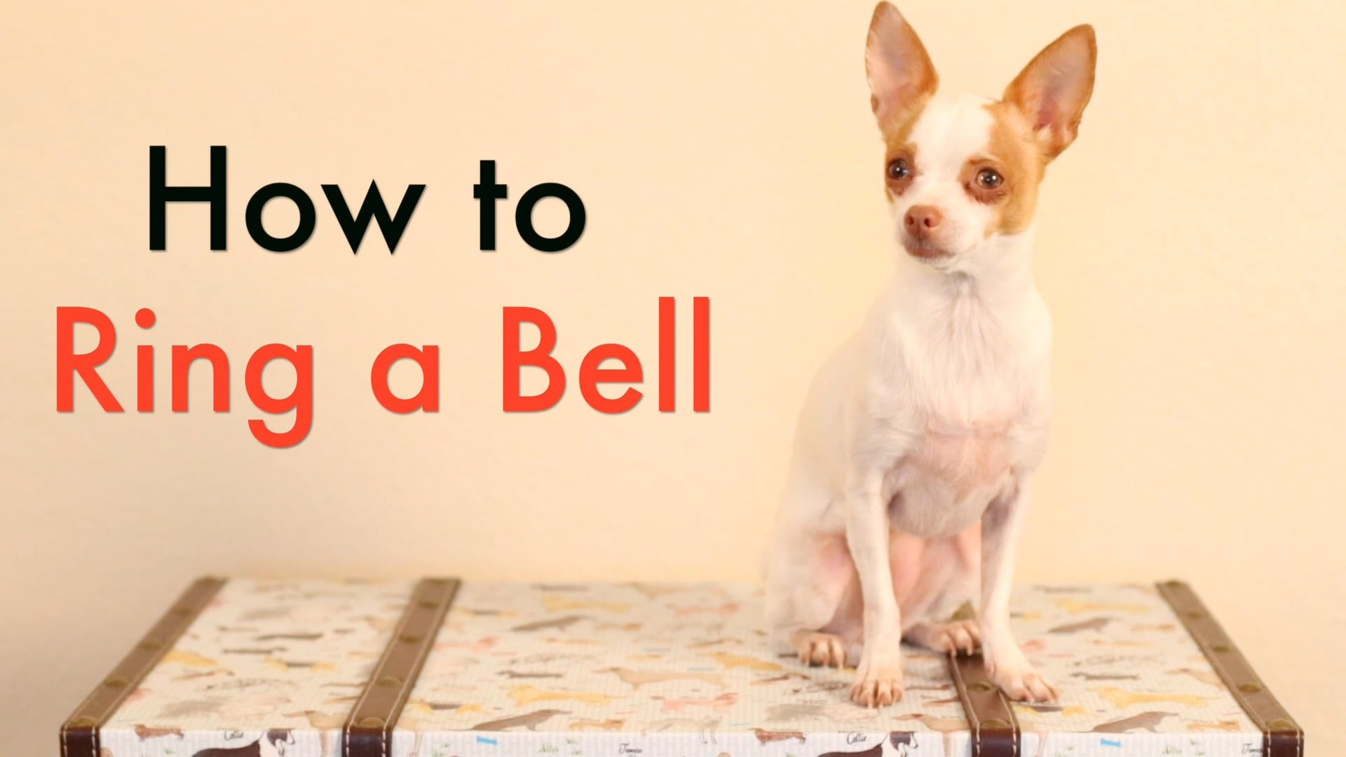 Train your dog how to ring a bell