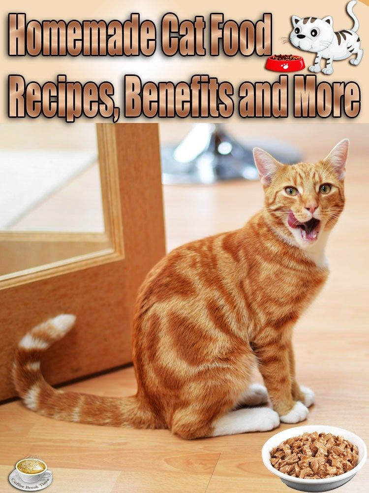 Homemade cat food recipes benefits and more coffee
