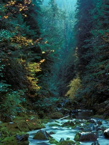 'North Fork of Santiam River, Central Oregon Cascades, USA' Photographic Print - Janis Miglavs | Art.com