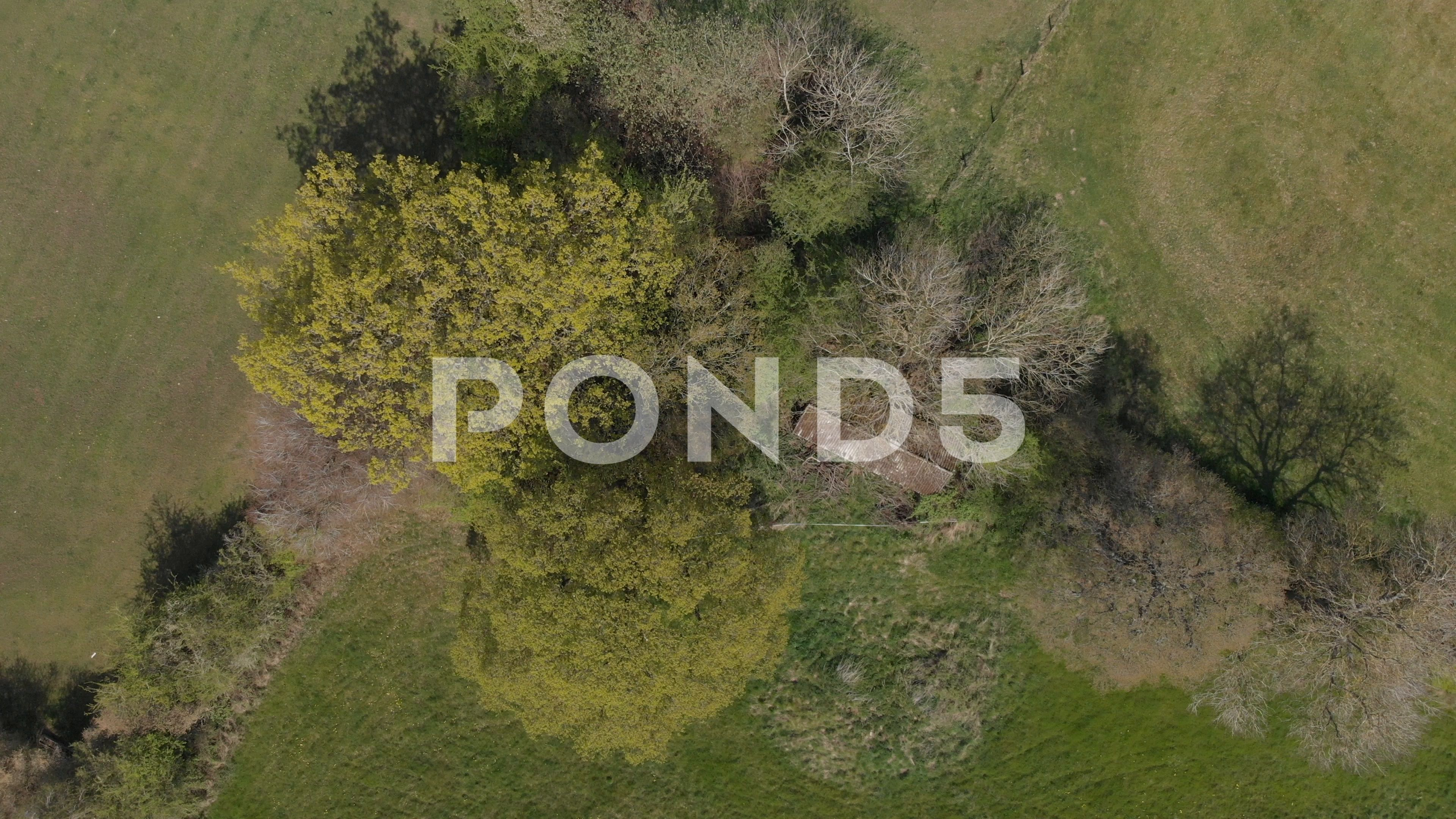 Bird S Eye View Old Corrugated Asbestos Roof Shed In Trees Aerial 4k Cine D Stock Footage Ad Corrugated Asbestos Roof Bird Birds Eye View Corrugated Shed