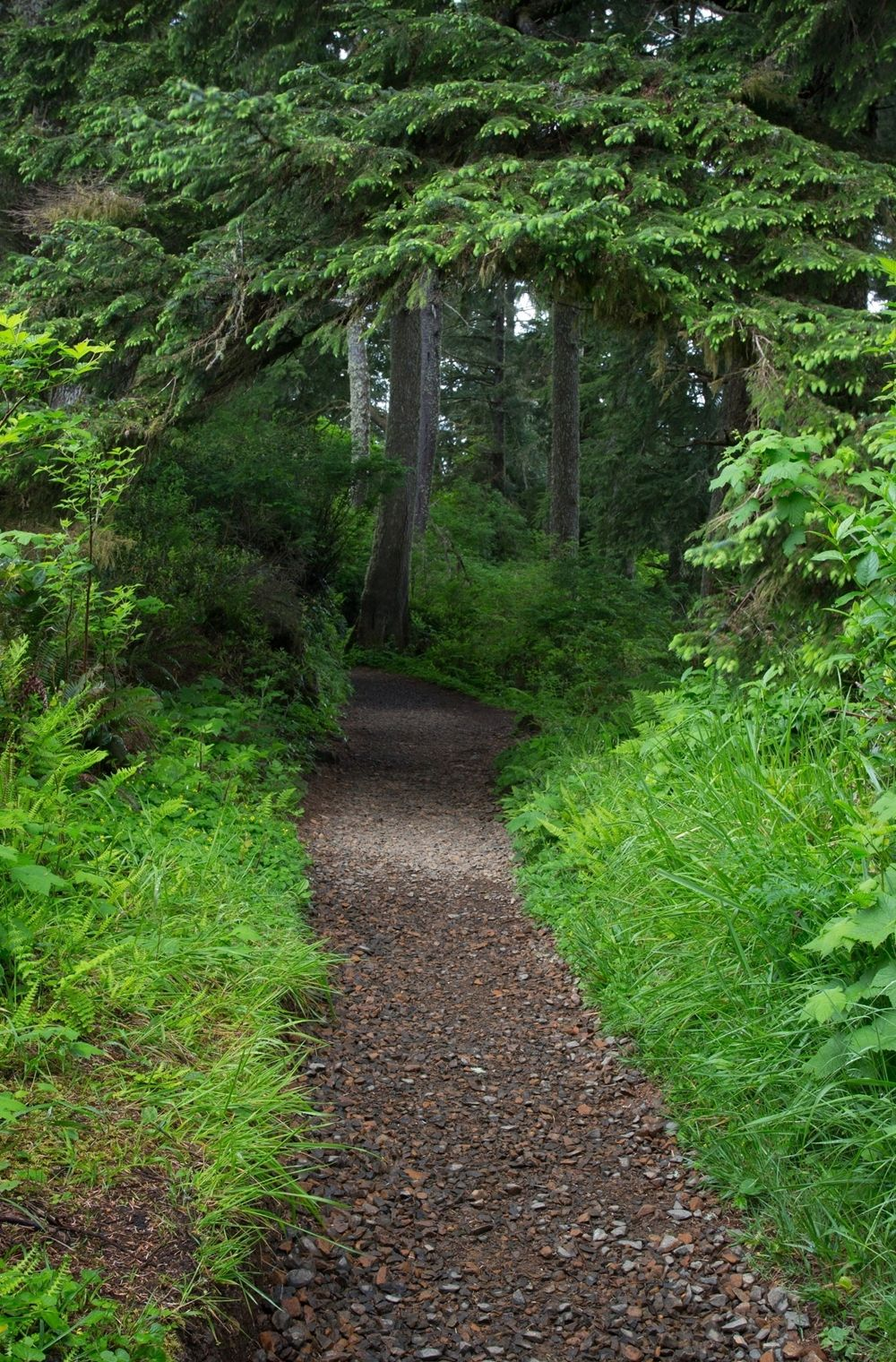 Forest Pathway Landscape Scenic Nature