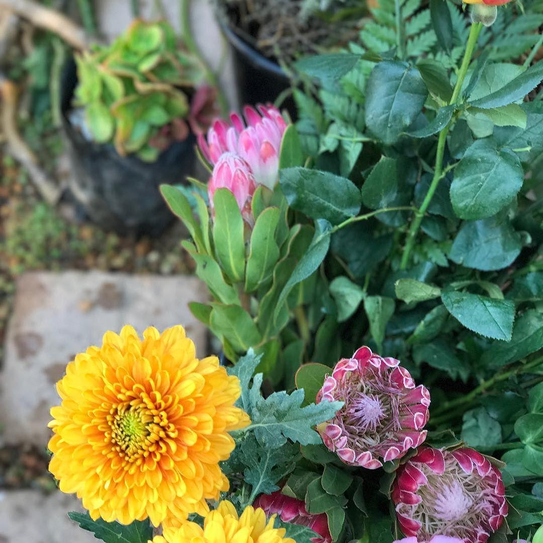 Untitled Florist, Plants, Inspiration