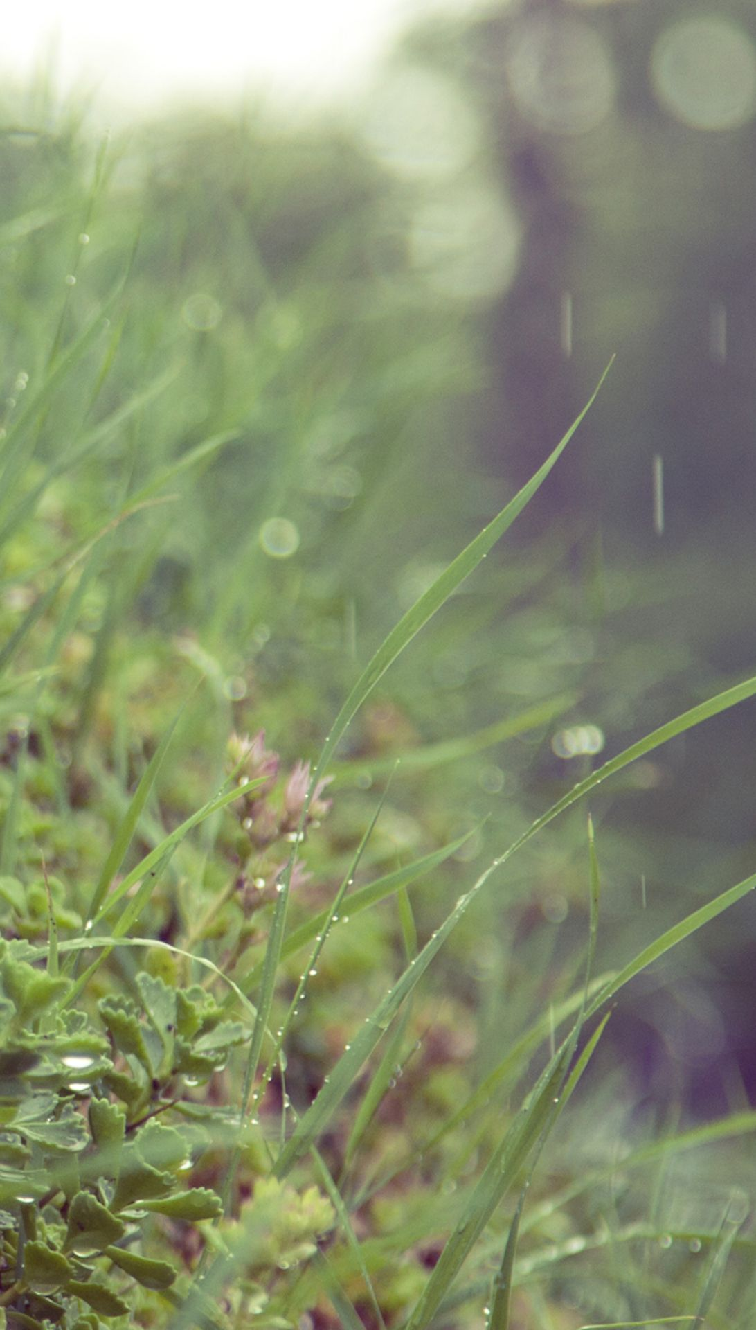 Summer Rain Find More Nature Themed Wallpapers For Your