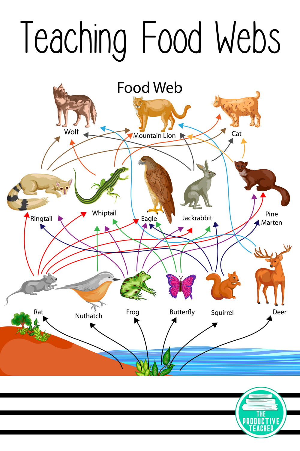 Food Chains Food Webs And Energy Pyramids Reading Passage Science Reading Passages Reading Passages Science Reading [ 1500 x 1000 Pixel ]